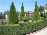 Fidane bime dekorative mbjellje e barit