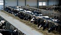 Shit blerje e bikav dhe lopve
