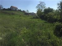 Shitet trualli ne Mitrovic Vaganic
