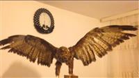 Shqiponjë e Balsamosur