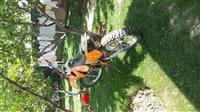 Shes motorrin KTM 125 cc