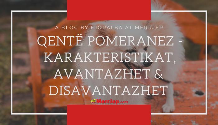Qentë Pomeranez - Karakteristikat, avantazhet & disavantazhet