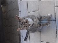 shitet maca e shtepis