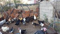 Shes pula dhe shota krejt !! URGJENT !!!!