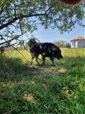 Qeni Sharit