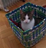 Jap macen falas per adoptim