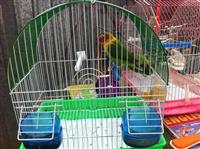 Papagaja