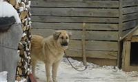 Qen i Sharrit