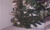 shitet lula viber +38649625613