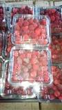 mjedra dhe manatherra rrush serezi
