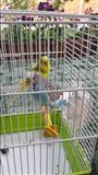 2 Papagaj Me Kafaz Ferplast