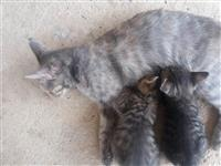Urgjent!! Falas jepen Macat per Adoptim