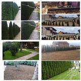 Rregullime kopshtesh