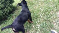 Terrier Bub