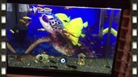 Peshqi dhe akuarium