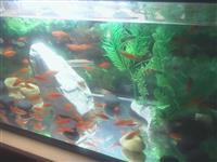 Peshqi