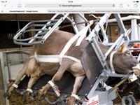 Maqinen per thundrra te lopve