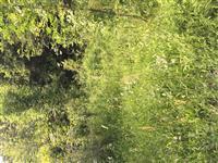 Shitet toka ne fshatin drejkovc pyll dhe fush