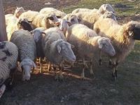 Shiten te gjitha delet