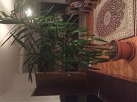 Lule Druri I Jetes