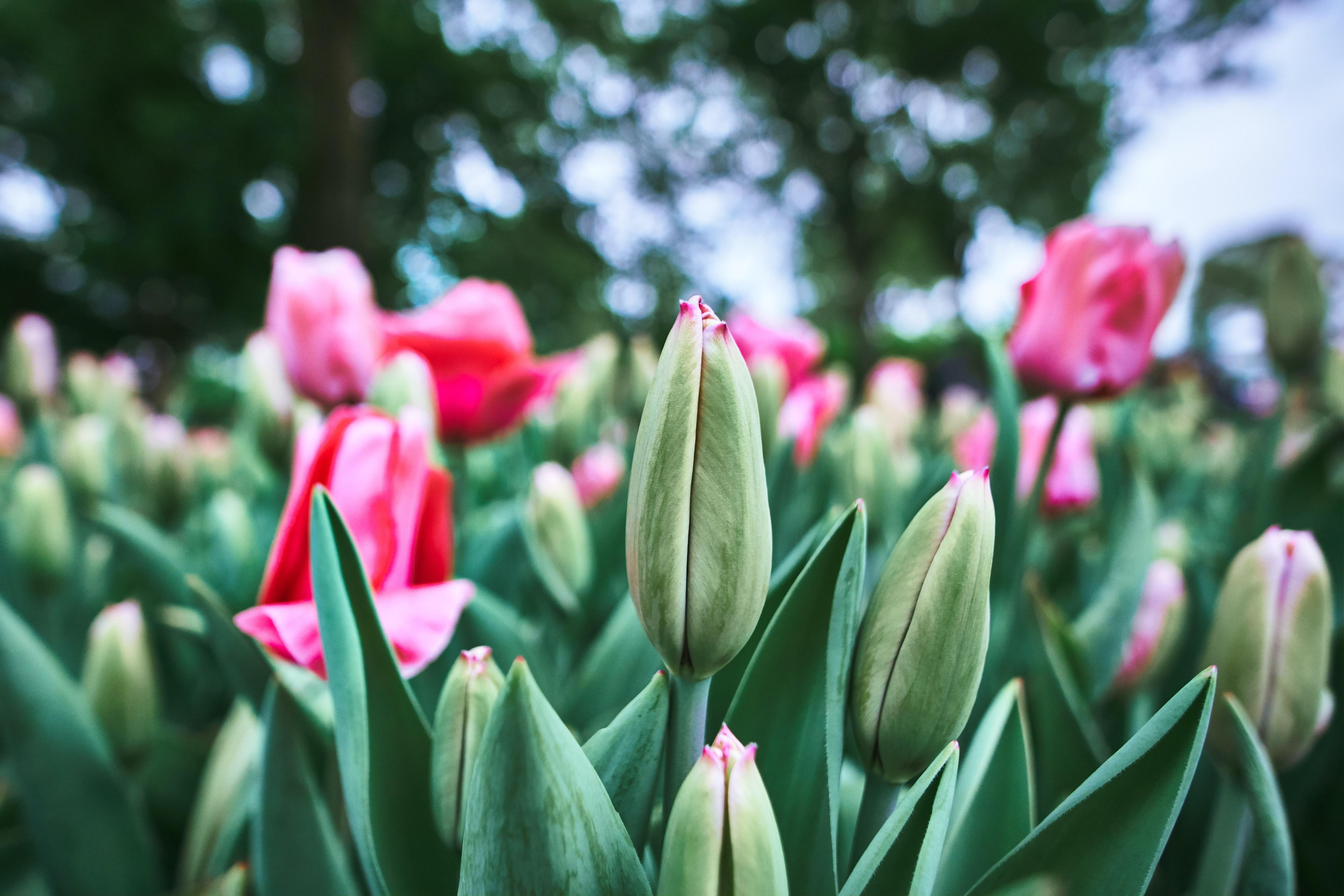 Ide të lira dhe të thjeshta për dizajnimin e kopshtit tuaj