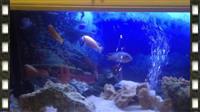 Peshqi Ciklida
