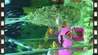 akuarium me peshqi