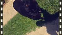 Qen i races Labrador