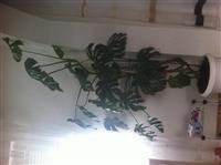 Lule shqiponje
