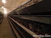 Leshoj me qera fermen e pulave në Kolovicë-Prishti