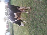 shes tri lop me vjeta mashqi mundsi ndrrimi