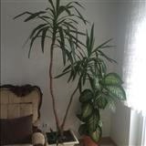 Lule te bukura per dhome