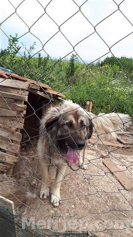 Qeni-i-sharrit-