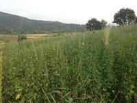 Vetem Detelina 1 hektar 20ari  m²