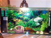 Aquarium me te gjitha elementet