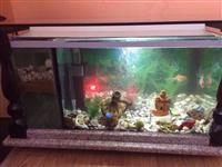 Peshqit ne Aukarium