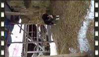 Qeni - Video