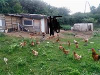 Ndrroj pulat me Shota