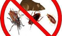 Bejm eliminimin e insekteve dhe brejtsve
