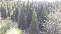 Pisha, drunje dekorativ