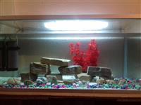 Aquarium per peshqi