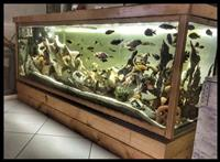 Akuarium Peshqi