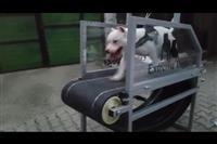 Trak per pittbull