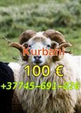 KURBANA