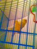 papagalla
