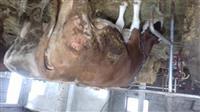 Shes lopën 600kg