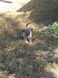 Ndrrohet klyshi i sharrit femen me terrier