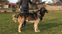 Qeni( Deltari Ilir )
