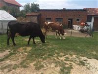 2 lop me vjeta