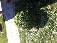 Rregullimi kopshtit